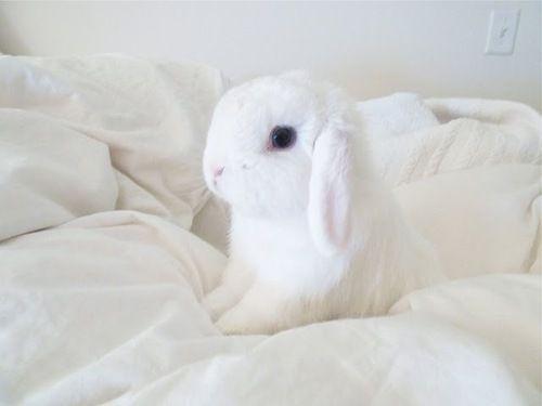 Baby Bunny Minecraft Skin