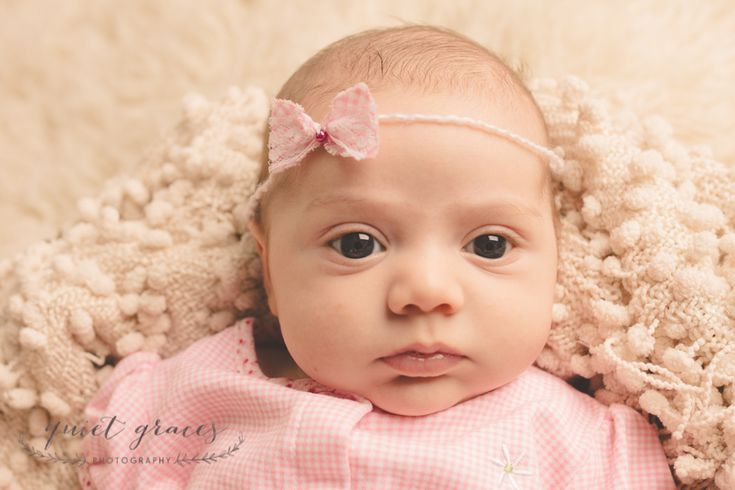 6 week old baby photographer greer sc