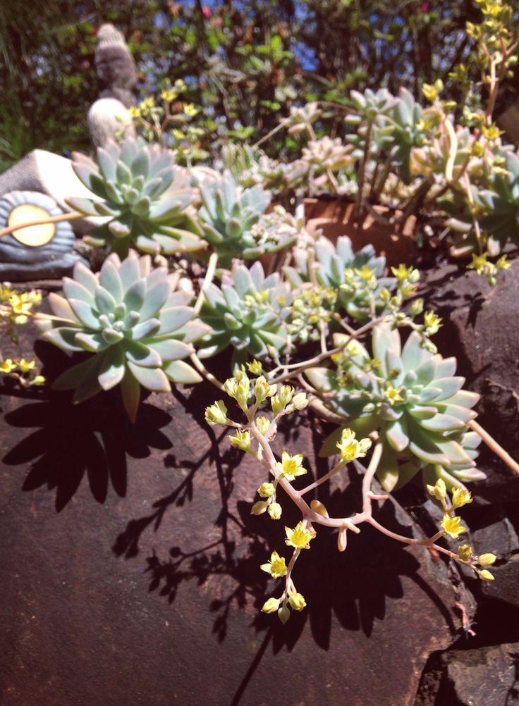 I love succulents 😍💖