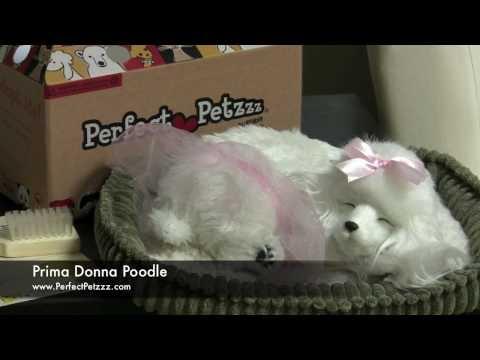 Perfect Petzzz : Poodle - Video