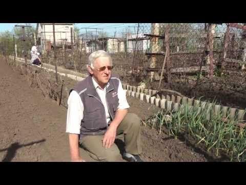 Первые зелёные операции с кустами винограда. 1-я часть. - YouTube