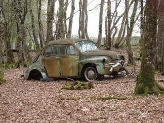 4cv in the woods
