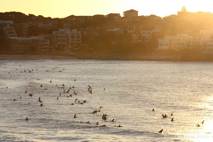 Surfing anthill in Bondi Beach by Morning Bondi