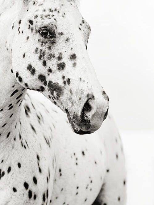 White & Black Horse