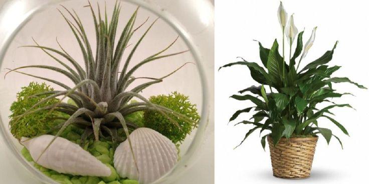 Erre az 5 növényre van szükséged és többé nem lesz párás a lakásod!