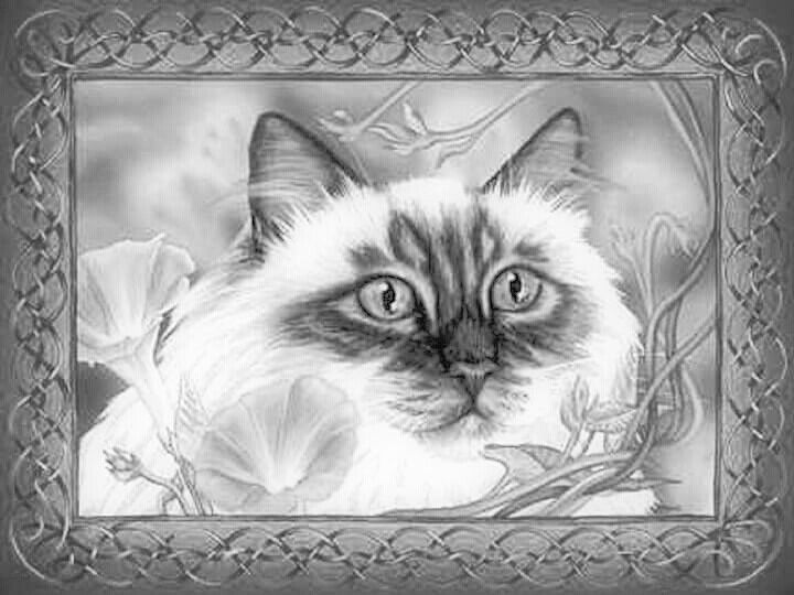 535 best Cats to Color all kinds of cats images on Pinterest