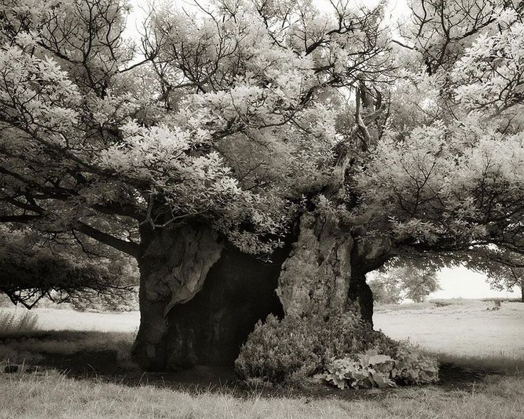Beth Moon has been searching for the world's oldest trees for the past 14 years.