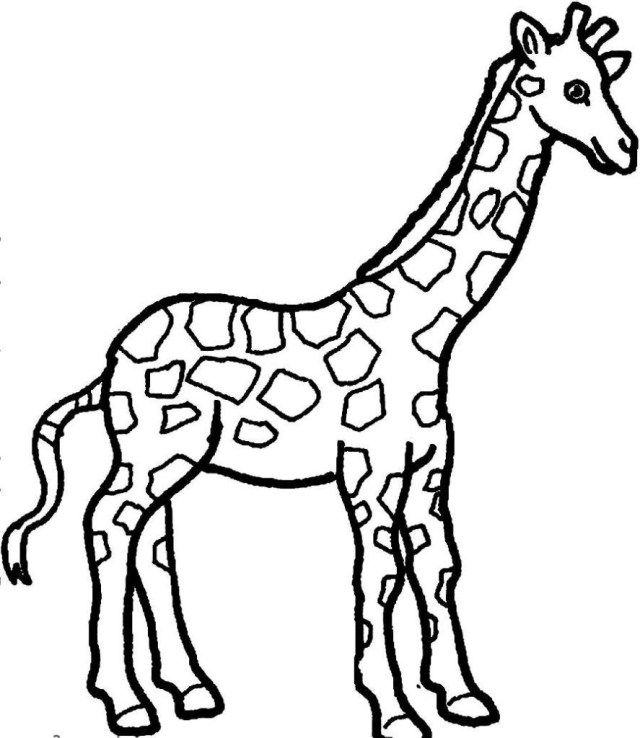 21 Exclusive Picture Of Giraffe Coloring Pages Zoo Animal