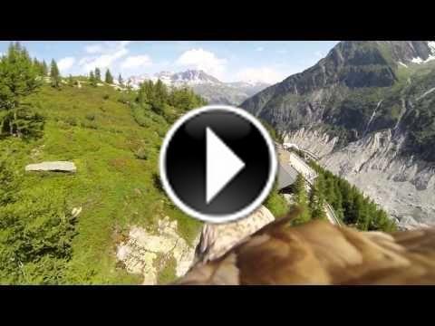 Les sensations d'un #aigle en plein vol à chamonix #gopro #montagne