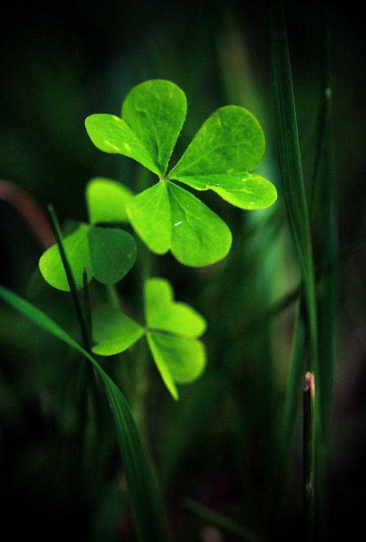 Irish ...