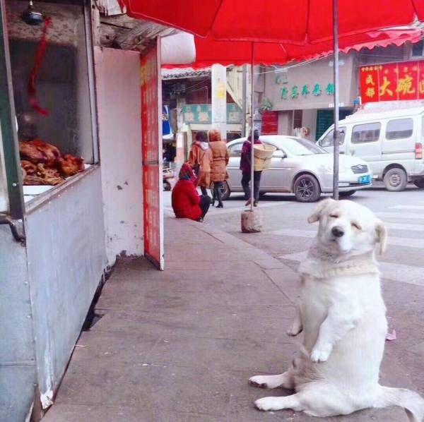 ローストチキンを見つめる犬の表情wwwwwwwww : ハムスター速報