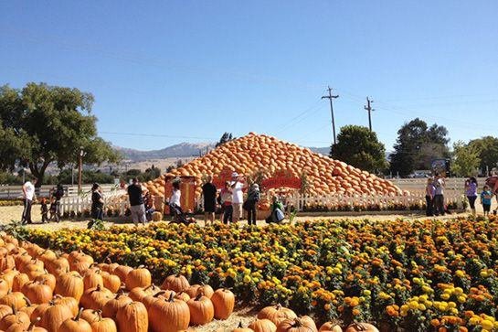 16 Things You MUST Do This Month In San Francisco #refinery29  http://www.refinery29.com/2014/10/75119/best-events-october-2014-san-francisco#slide1  Uesugi Farm Pumpkin PatchUesugi Farm, home to last year's Guinness World Record-winner for largest pumpkin, hosts a variety of seasonal attractions, from a two-acre corn maze to a mini-donkey petting zoo. Perfect for a day of family fun — or channeling your inner child.When: Wednesday, October 1 through Friday, October 31, 9 a.m. to ...