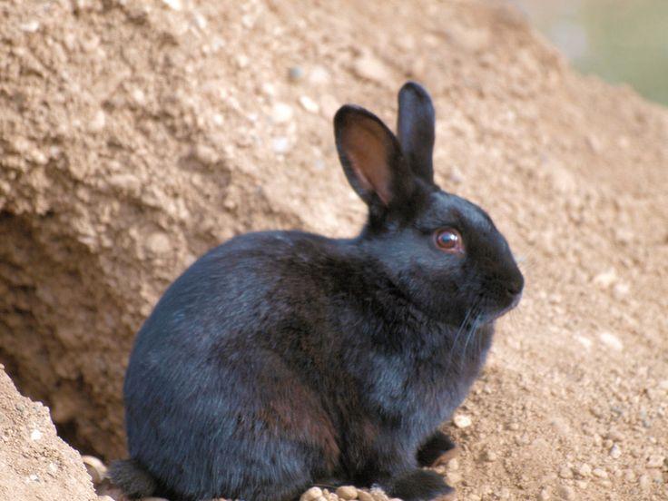 a nice bunny