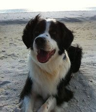 Find dog friendly hotels for your trip