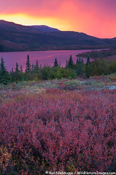 ✯ Denali National Park, Alaska