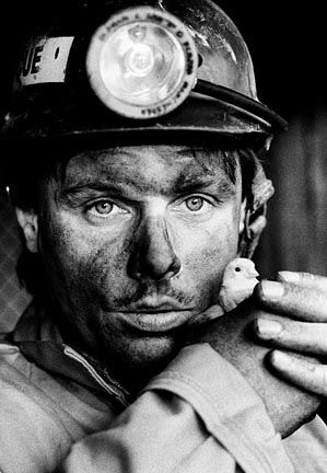 A coal miner with the last canary to be used down underground.