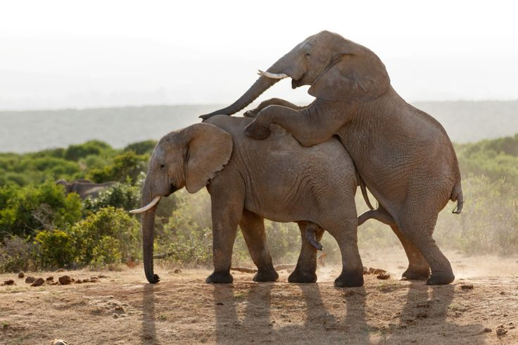 No Comment - Image taken at The  Addo Elephant National Park
