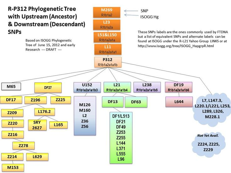 how to create phylogenetic tree