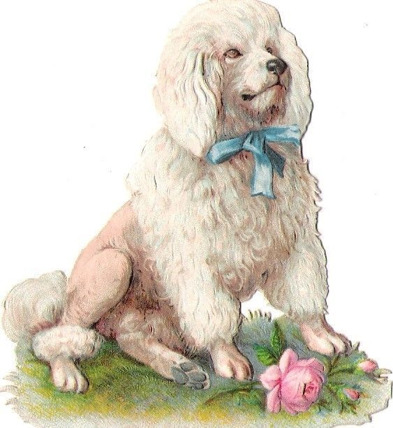 Oblaten Glanzbild scrap die cut chromo Pudel poodel Hund dog chien rose: