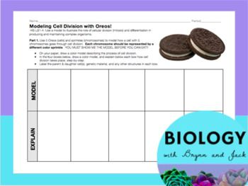 Part 1 of this activity asks students to use Oreos (Cells) and sprinkles (chromosomes) to model mitosis. They then copy their models to paper and write a brief explanation of each Oreo and answer analysis questions. Part 2 asks students to watch a brief video of the relationship between mitosis and cancer, and answer