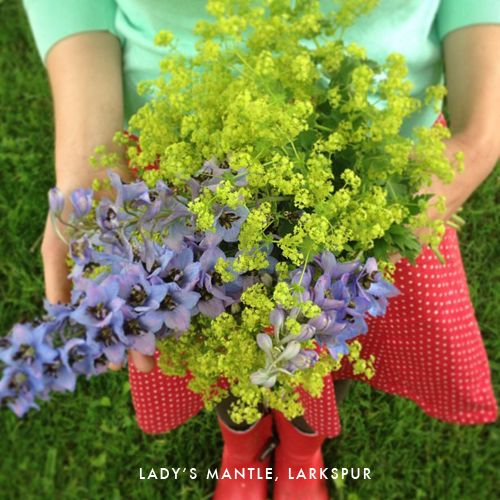 The House That Lars Built.: Bouquet a day