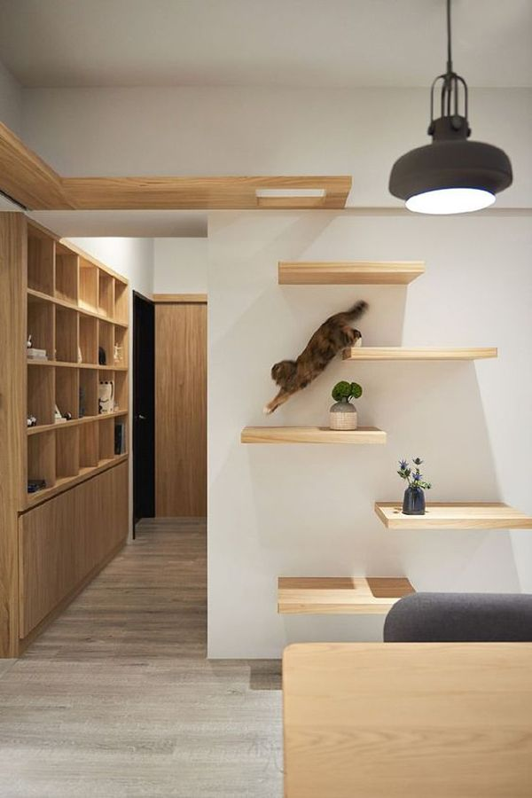 30 Modern Diy Cat Playground Ideas In Your Interior Home Design And Interior Cat Wall Shelves Cat Walkway Cat Playground