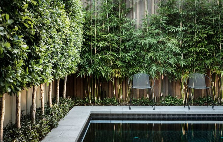 Pool Privacy, use narrow trees to line the fence and keep privacy beautiful also