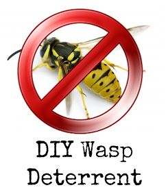 DIY Wasp deterrent dry old coffee grinds in a tin can. Light them and the smoke keeps them away.