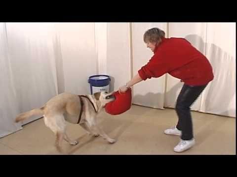 Команда Отдай - Дрессировка собак дома с нуля