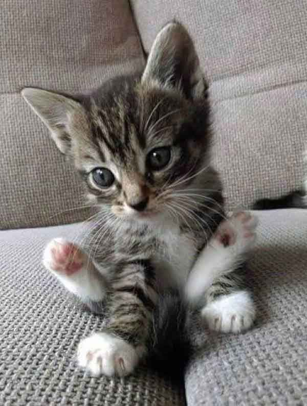 What a cutie patootie !! #kittens #cats #cuteanimals #kitty