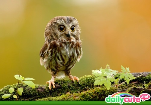 : Babies, Little Owls, Animals, So Cute, Baby Owls, Things, Photo, Birds