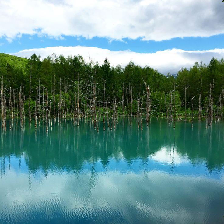 美瑛の青い池 #hokkaido #aoiike