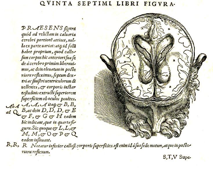 recipe: brain of revolution [11]