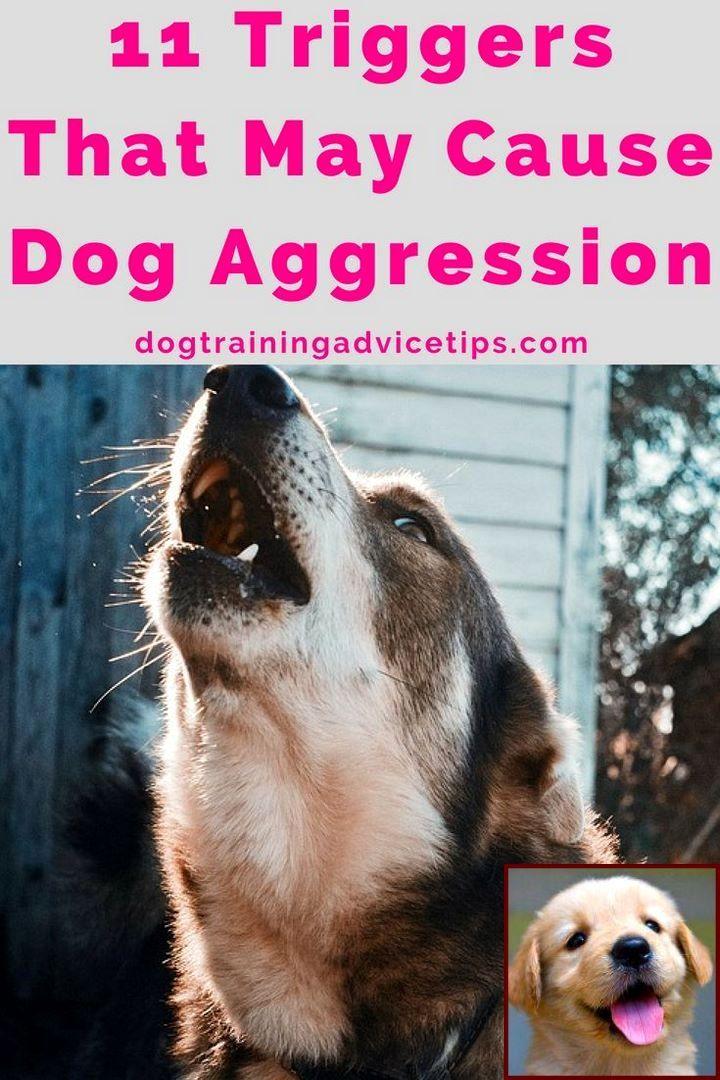Dog Behavior Youtube And Dog Training Classes East Kilbride
