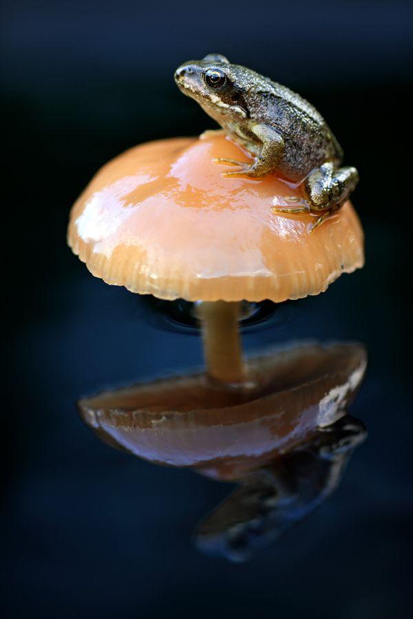 Fungi Frog by Simon Roy, via 500px