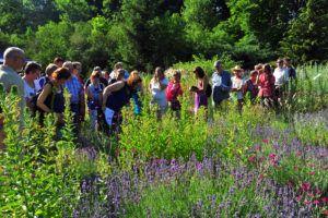 Tag des Botanischen  Gartens am 12. Juni: Mit Führungen zu vielen verschiedenen Themen rund um die Pflanzenwelt, einer Kinderwerkstatt, einer Sonderausstellung zu nachwachsenden Rohstoffen und vielem mehr. (Bild: Walter Welß)