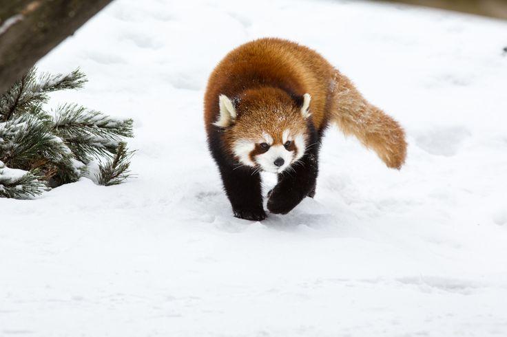 Le Zoo de Granby est un des zoos les plus importants du Canada et du nord-est de l'Amérique du Nord. Il présente près de 1000 animaux répartis en plus de 225 espèces.
