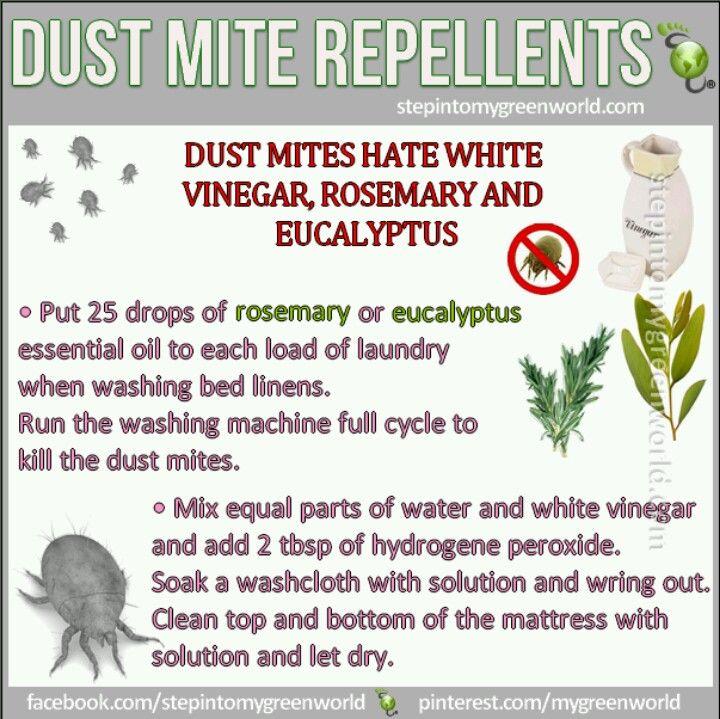Dust mite repellent Tips Pinterest