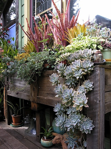 Stunning container full of succulents, herbs and other perennials...so very pretty!!