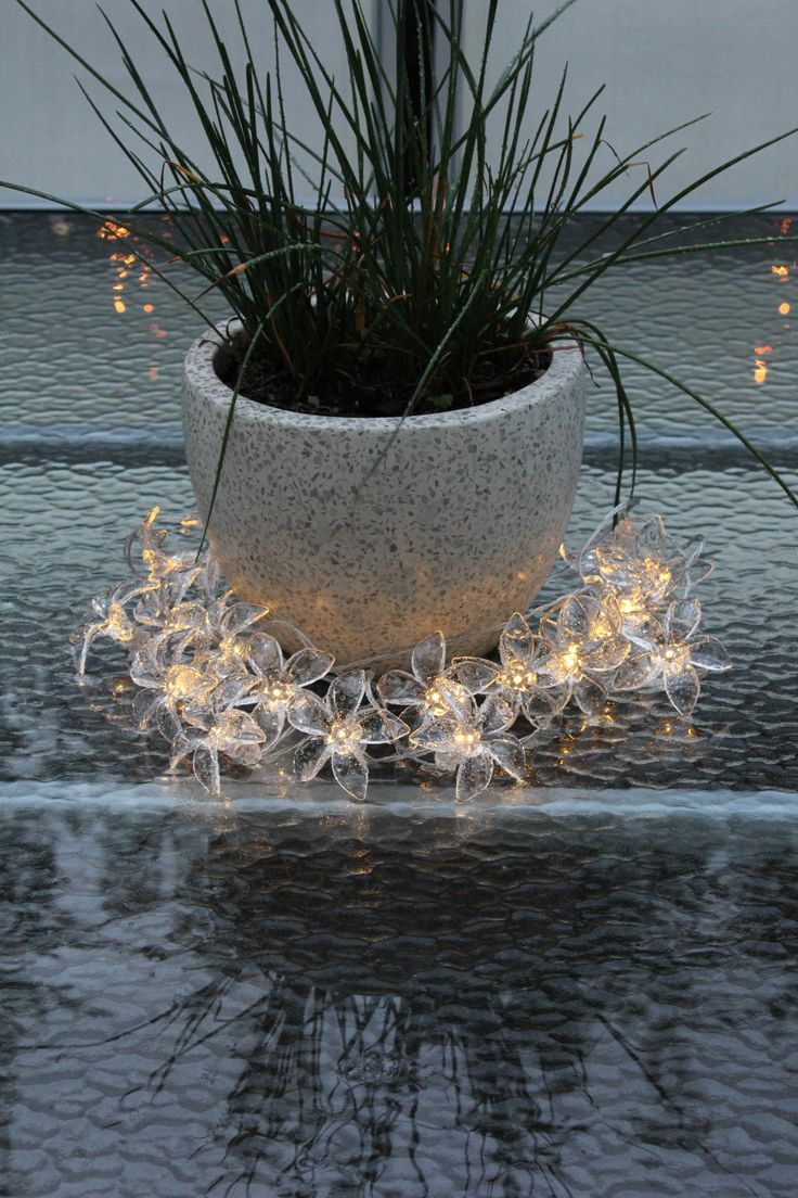 Solar-power pretty flower fairy lights around plant