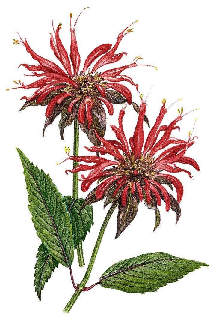 red vintage flowers