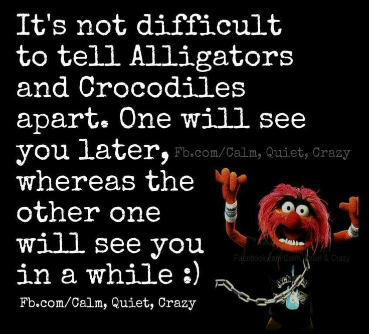 47 Best Animal (muppet ) Quotes Images On Pinterest