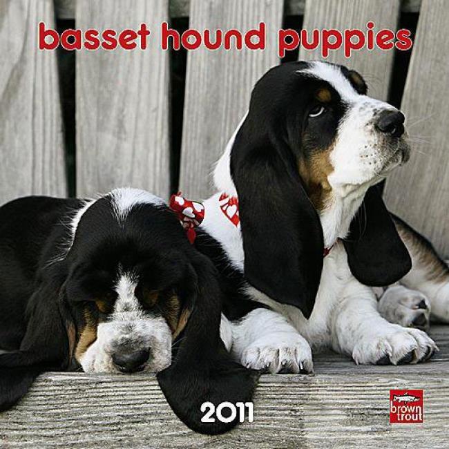 Black & white miniature Basset hounds