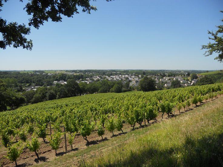Au loin les collines des Mauges depuis les coteaux du Layon en Anjou..juillet 2012