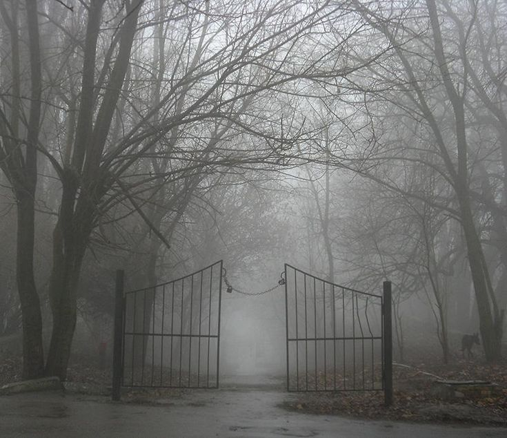 Gateway to Fog - by Andrew Krotov - Pixdaus