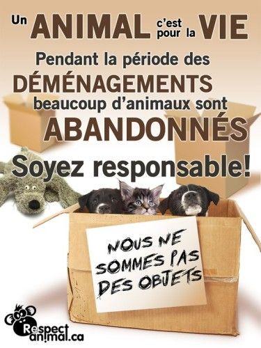 Les animaux ne sont pas des objets