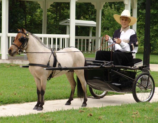 Driving Supplies offered by MiniHorseSales.com