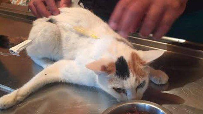 Dodici giorni dopo il terremoto, ad Amatrice estratta viva la gatta Carina