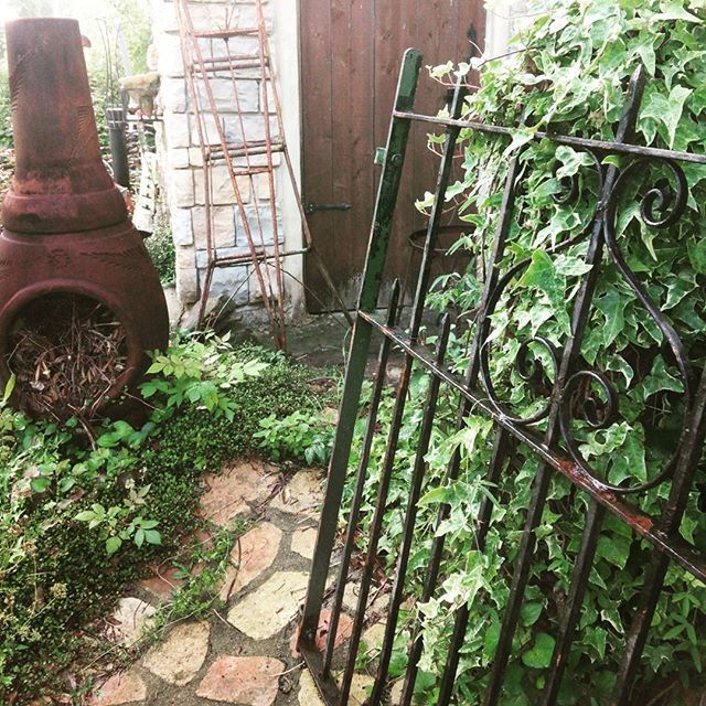 小屋に向かう小道脇はモシャモシャアイビーで覆い尽くされていたけど…ひとつアイアンゲートを立てかけただけで歩くのが楽しくなります~♪ #アイアンゲート#ディスプレイ#さり気なく#小道#雰囲気一変#気分はイギリス#古道具#三脚