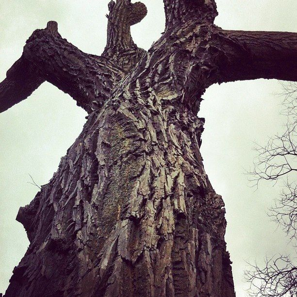 Bare Bark by Chaotic House via Instagram